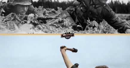 Renklendirme Çalışması – Wehrmacht